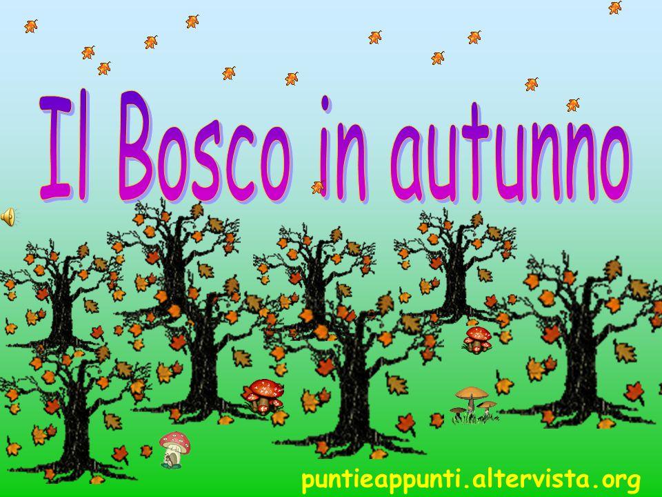 Il Bosco in autunno puntieappunti.altervista.org