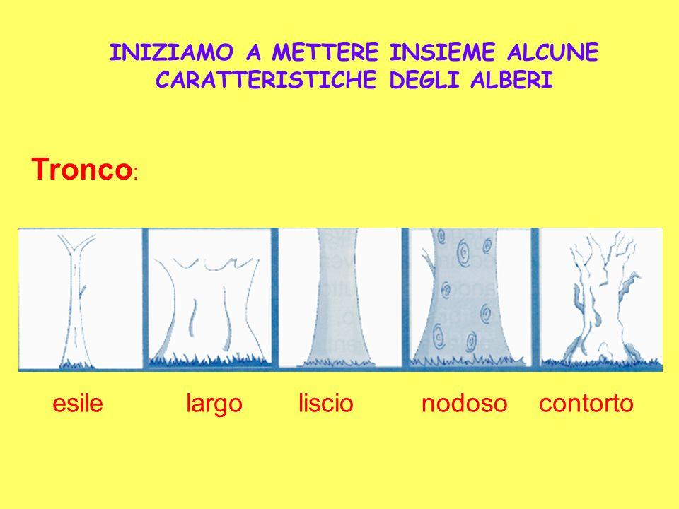INIZIAMO A METTERE INSIEME ALCUNE CARATTERISTICHE DEGLI ALBERI
