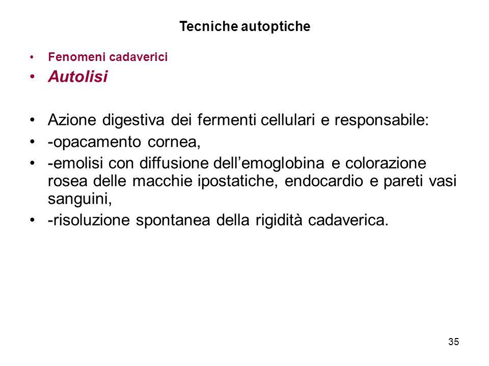 Azione digestiva dei fermenti cellulari e responsabile: