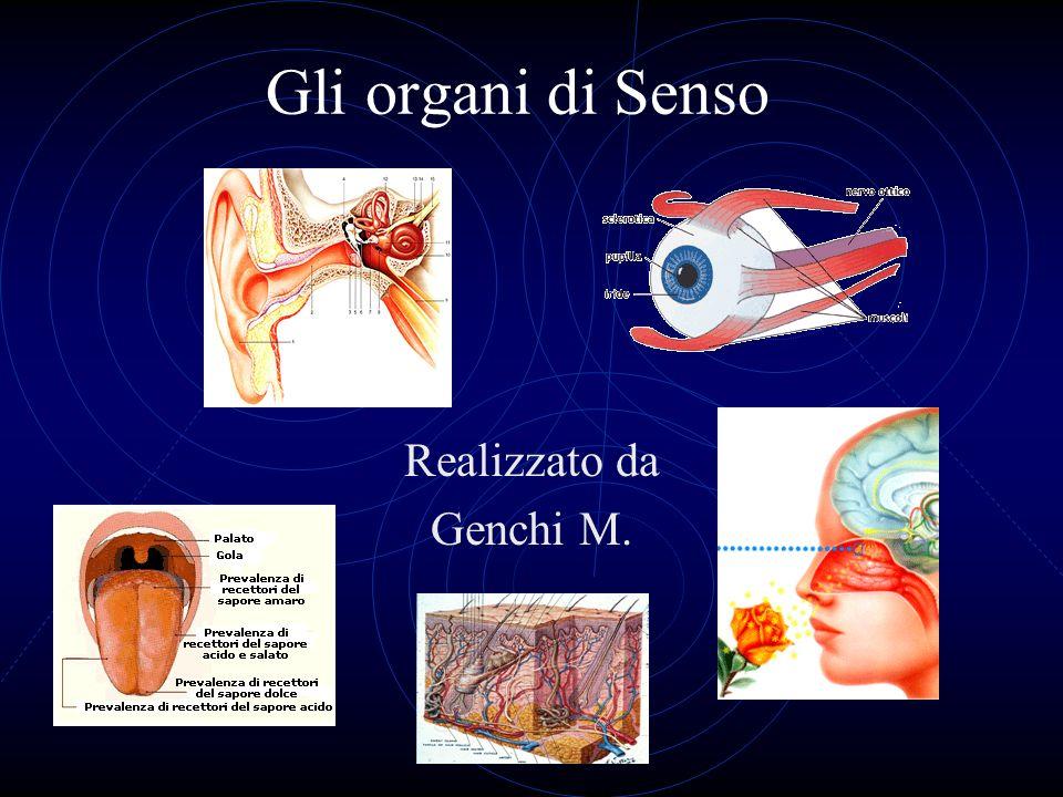 Gli organi di Senso Realizzato da Genchi M.