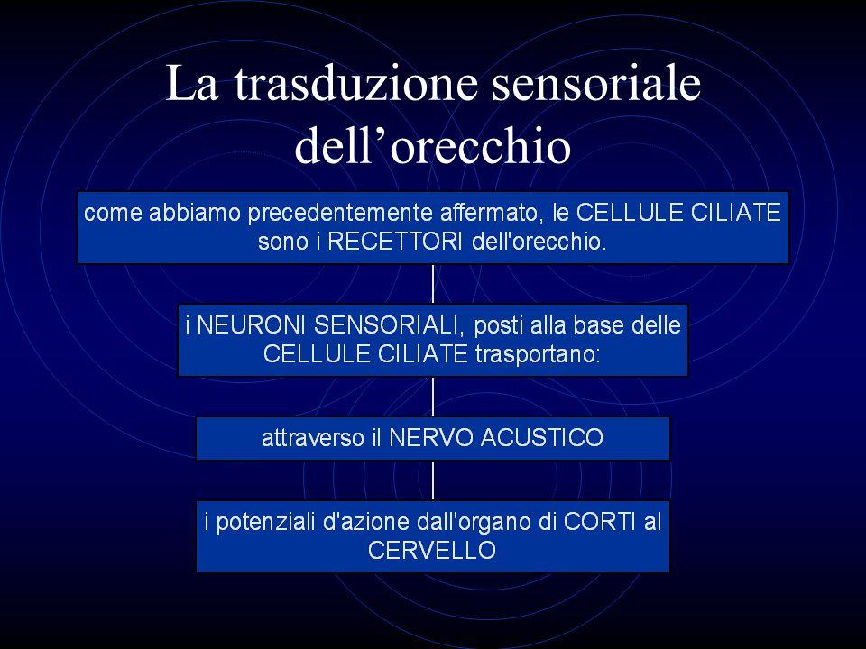 La trasduzione sensoriale dell'orecchio