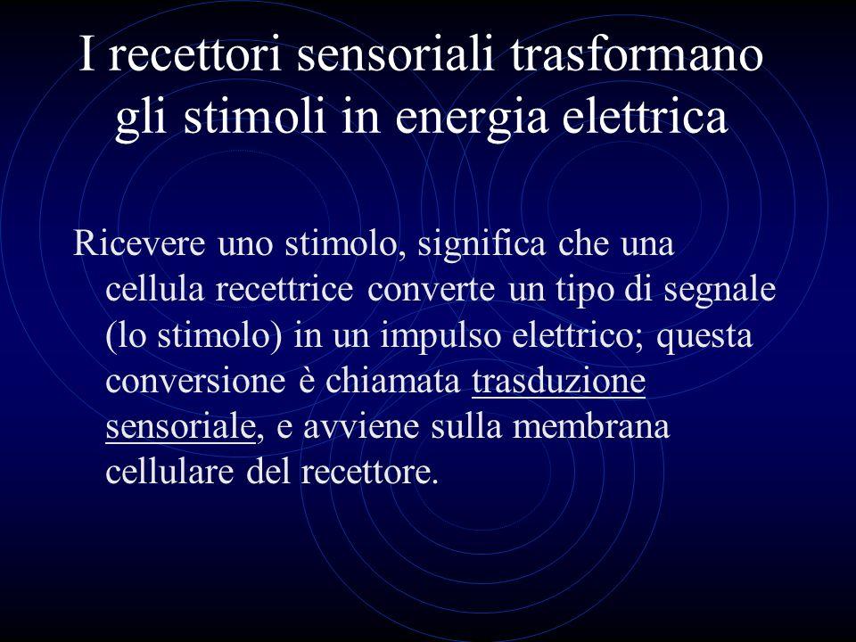 I recettori sensoriali trasformano gli stimoli in energia elettrica