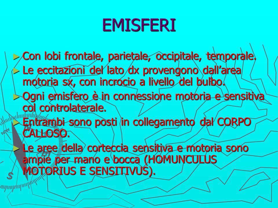 EMISFERI Con lobi frontale, parietale, occipitale, temporale.