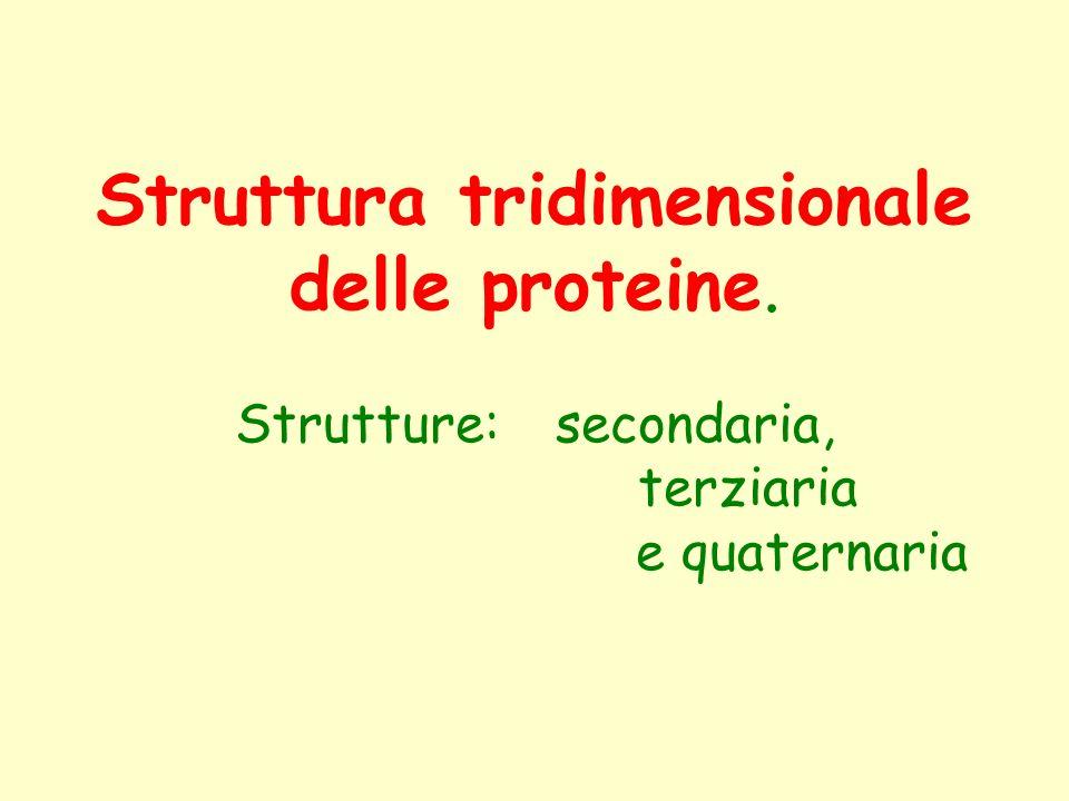 Struttura tridimensionale delle proteine. Strutture:. secondaria,