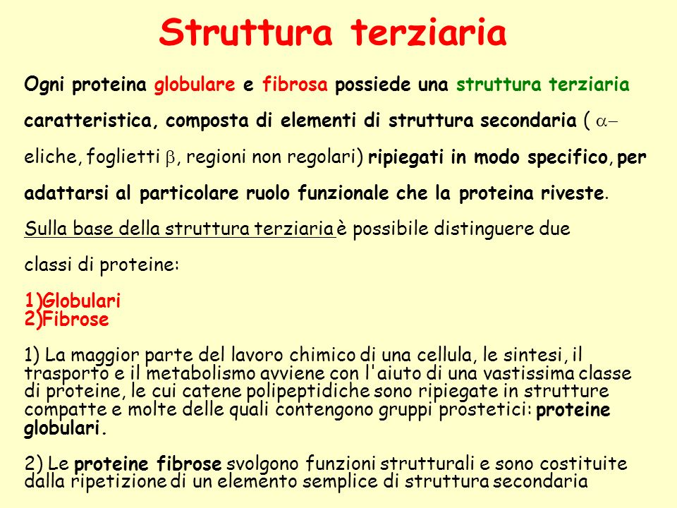 Struttura terziaria Ogni proteina globulare e fibrosa possiede una struttura terziaria.
