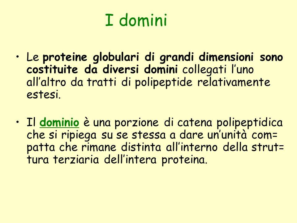 I domini