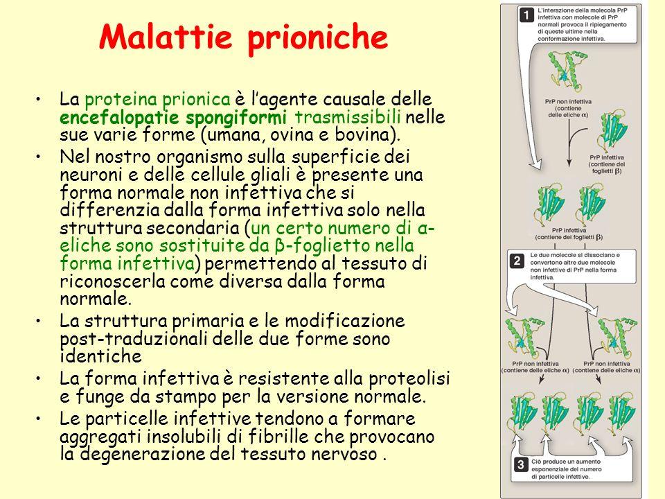 Malattie prioniche