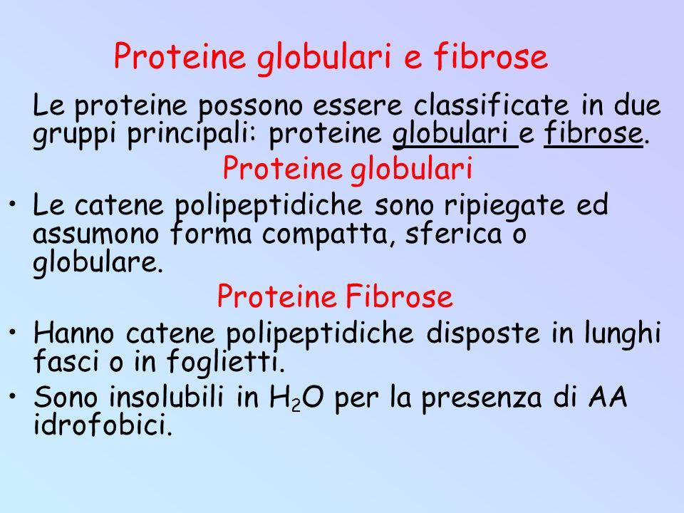 Proteine globulari e fibrose