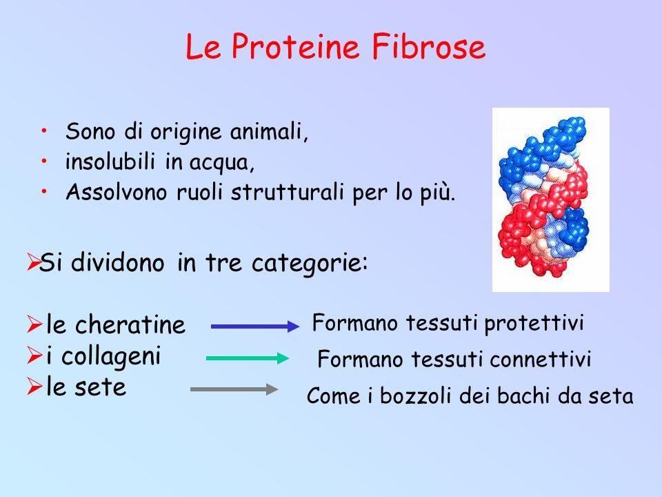 Le Proteine Fibrose Si dividono in tre categorie: le cheratine