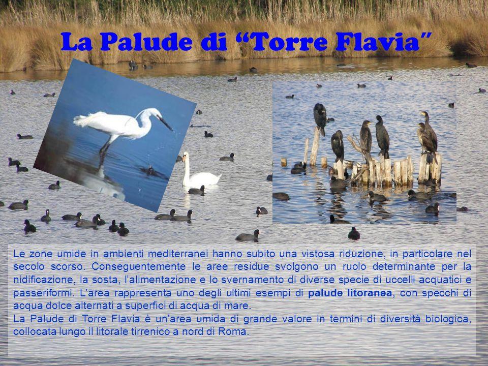 La Palude di Torre Flavia