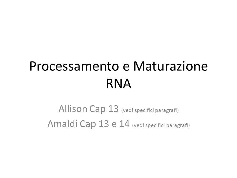 Processamento e Maturazione RNA