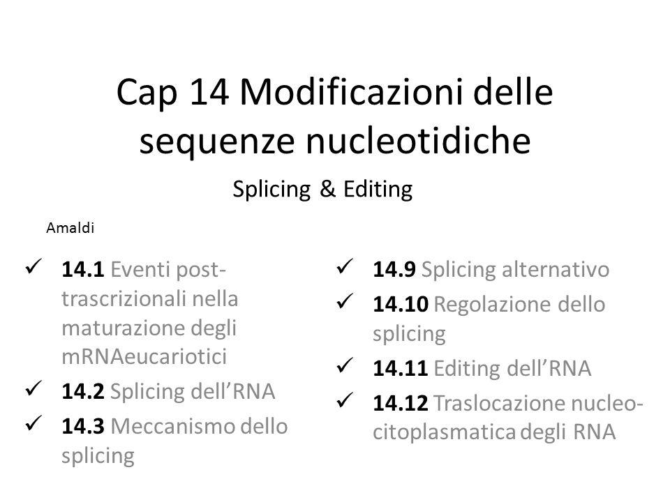 Cap 14 Modificazioni delle sequenze nucleotidiche