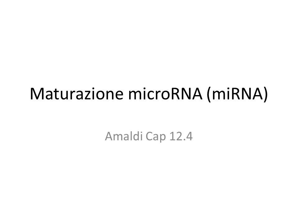 Maturazione microRNA (miRNA)