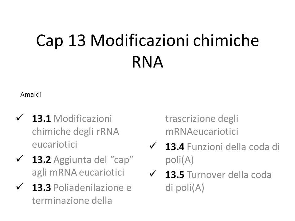 Cap 13 Modificazioni chimiche RNA