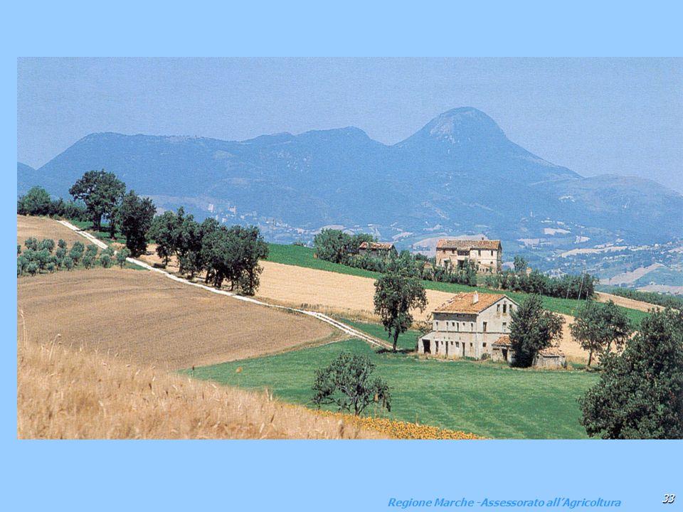 Regione Marche -Assessorato all'Agricoltura