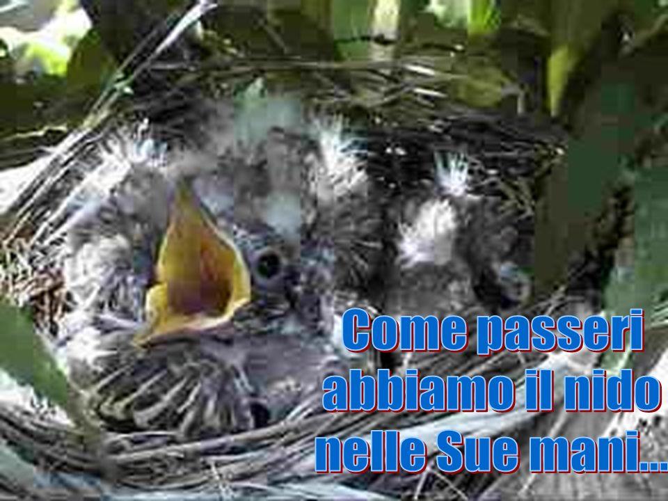 Come passeri abbiamo il nido nelle Sue mani...