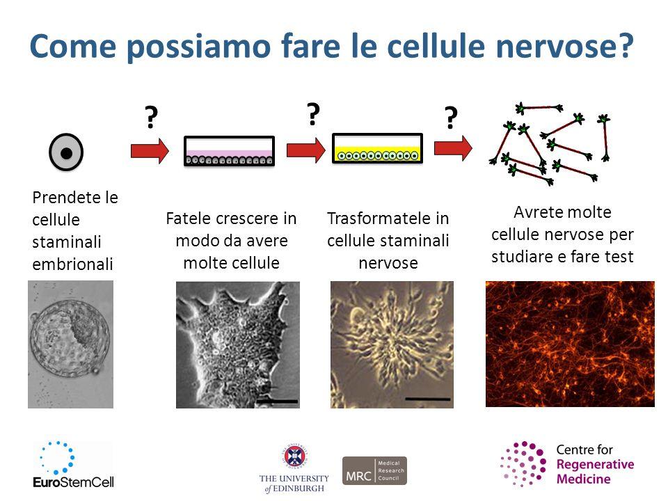 Come possiamo fare le cellule nervose