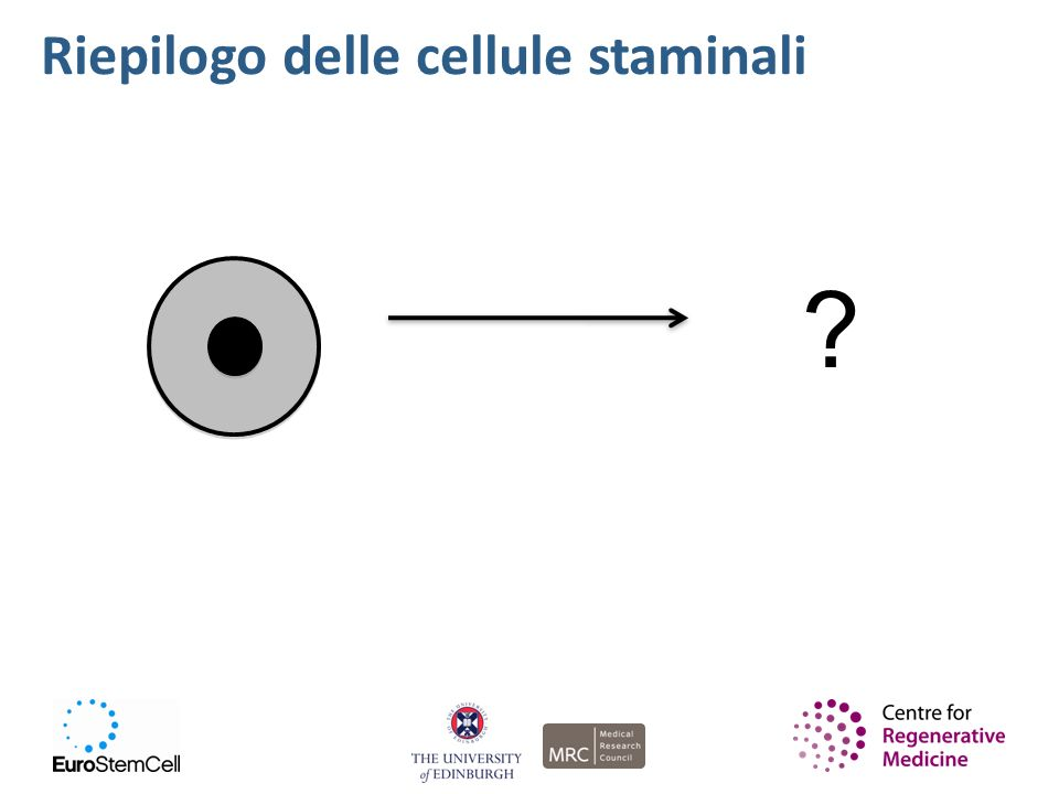 Riepilogo delle cellule staminali 4 4