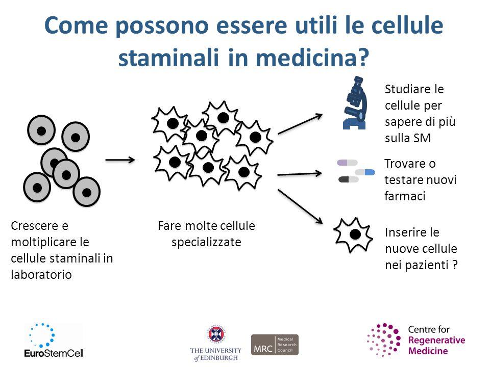 Come possono essere utili le cellule staminali in medicina