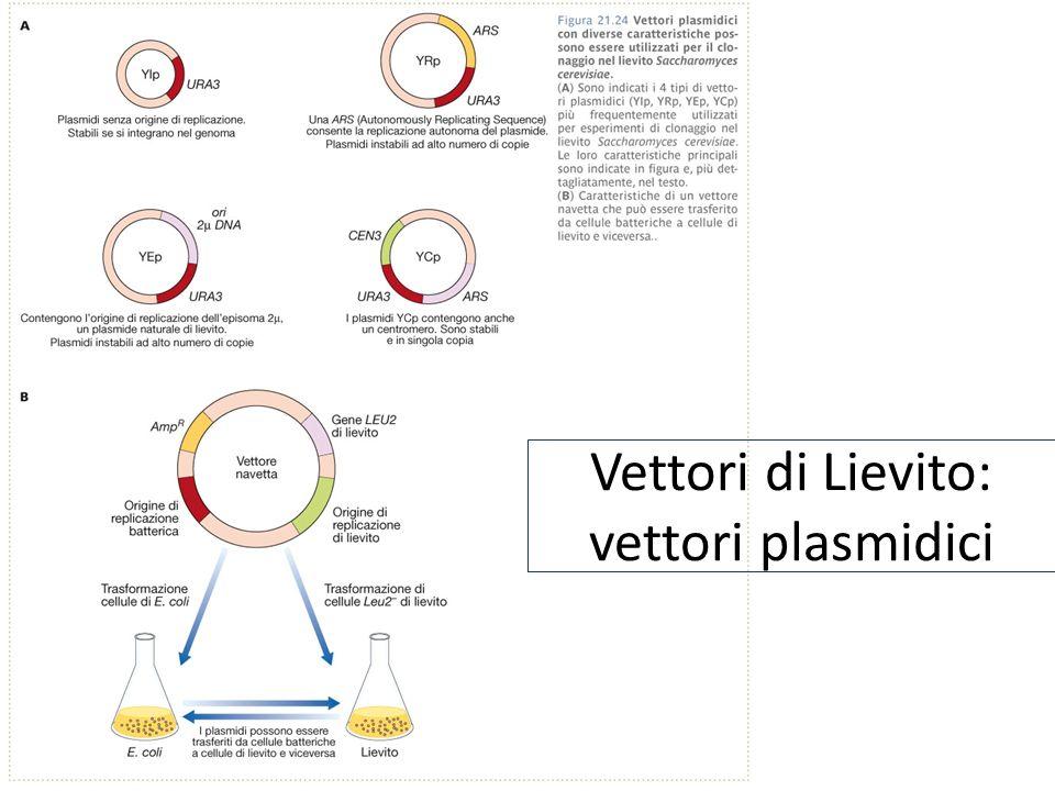 Vettori di Lievito: vettori plasmidici