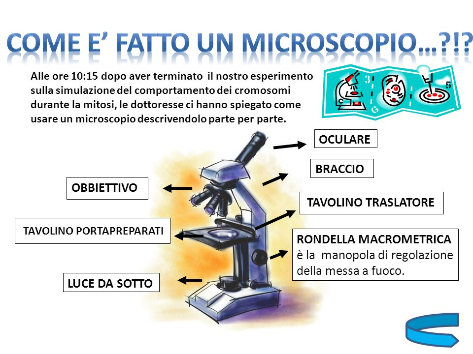 COME E' FATTO UN MICROSCOPIO… !