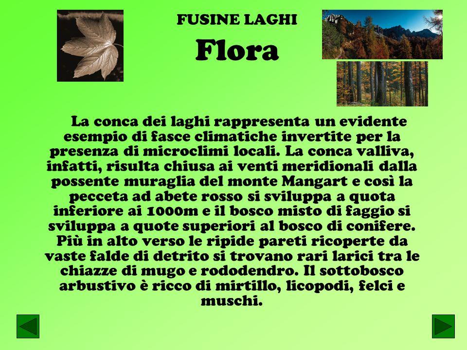 FUSINE LAGHI Flora.