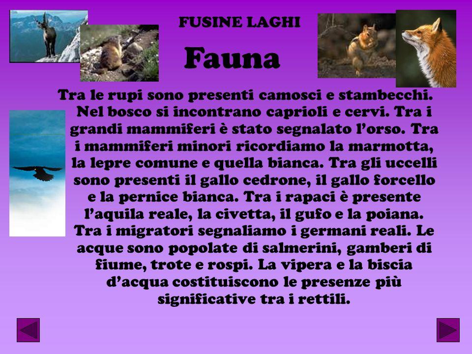 FUSINE LAGHI Fauna.