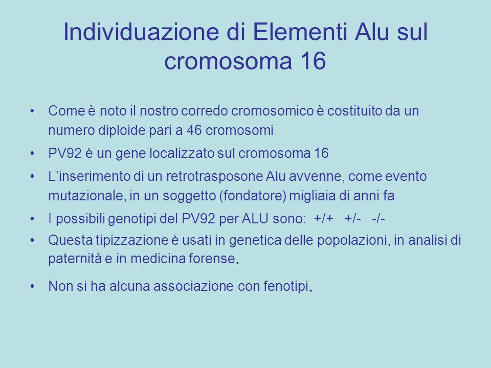 Individuazione di Elementi Alu sul cromosoma 16