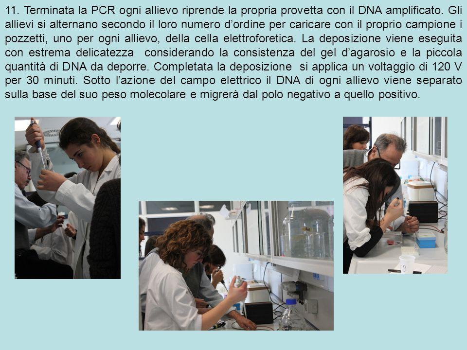 11. Terminata la PCR ogni allievo riprende la propria provetta con il DNA amplificato.