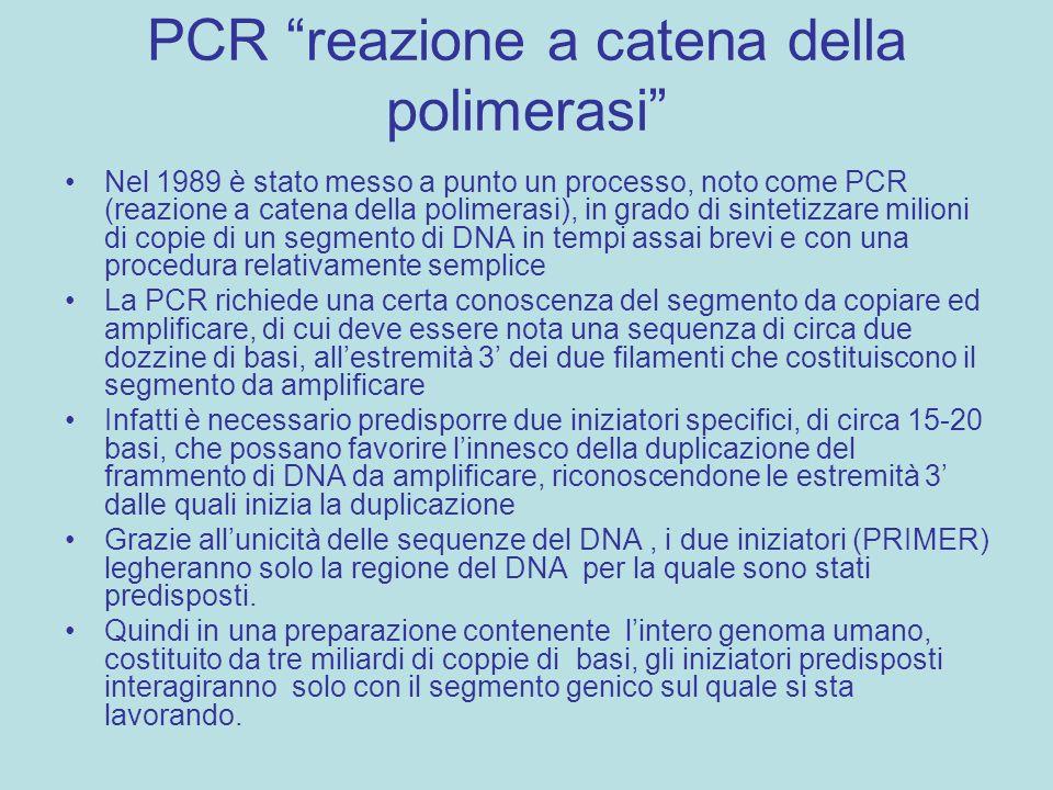PCR reazione a catena della polimerasi