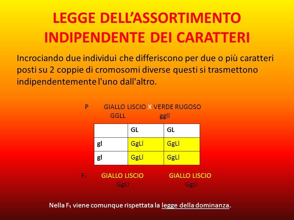LEGGE DELL'ASSORTIMENTO INDIPENDENTE DEI CARATTERI