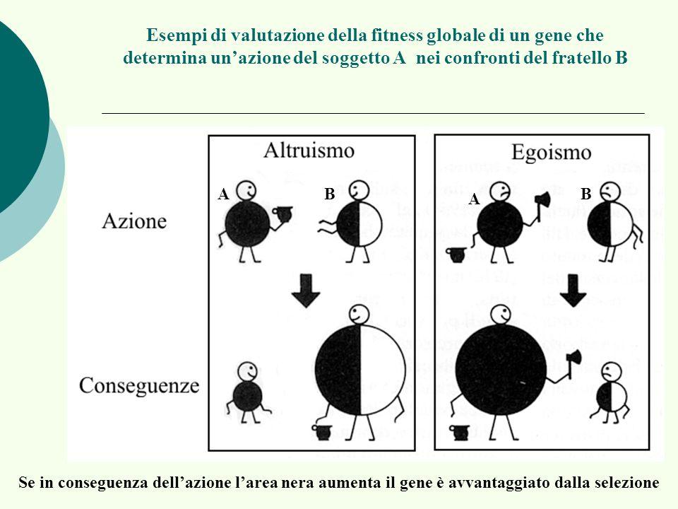 Esempi di valutazione della fitness globale di un gene che determina un'azione del soggetto A nei confronti del fratello B