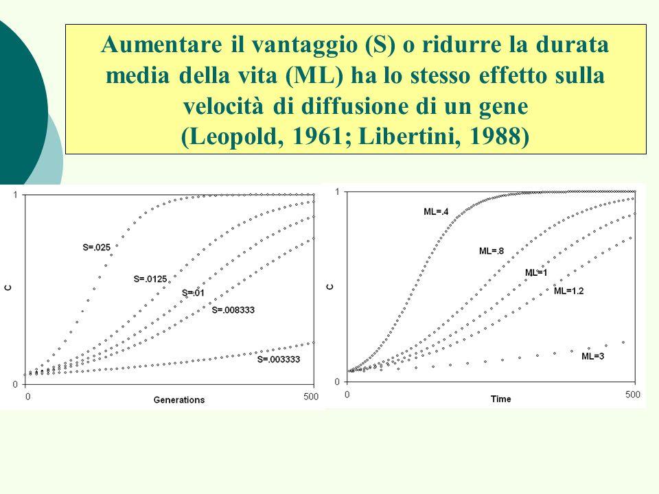 Aumentare il vantaggio (S) o ridurre la durata media della vita (ML) ha lo stesso effetto sulla velocità di diffusione di un gene (Leopold, 1961; Libertini, 1988)