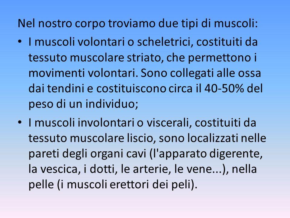 Nel nostro corpo troviamo due tipi di muscoli: