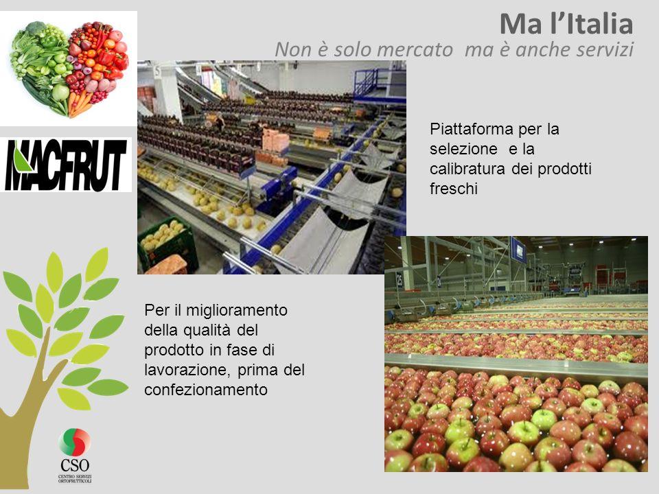 Ma l'Italia Non è solo mercato ma è anche servizi