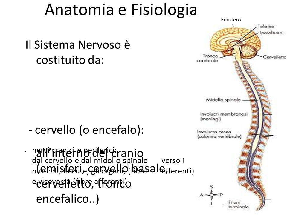 Anatomia e Fisiologia Il Sistema Nervoso è costituito da: