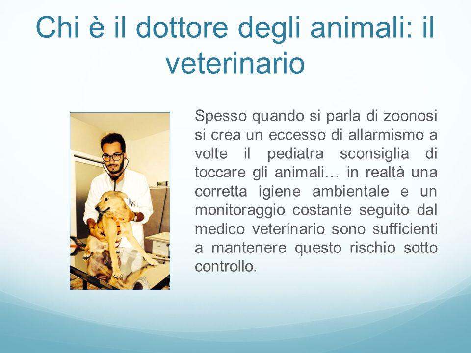 Chi è il dottore degli animali: il veterinario