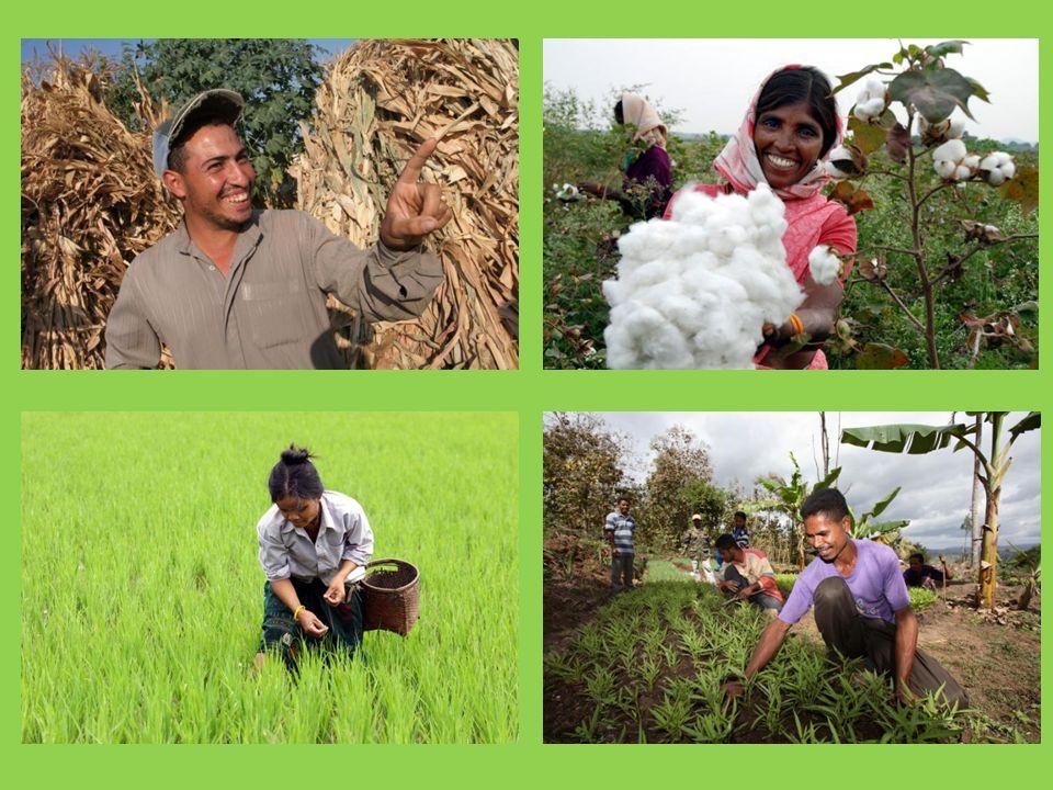 Prova a immaginare di essere un contadino e di dipendere dall'attività di coltivazione per guadagnarti da vivere e mangiare.