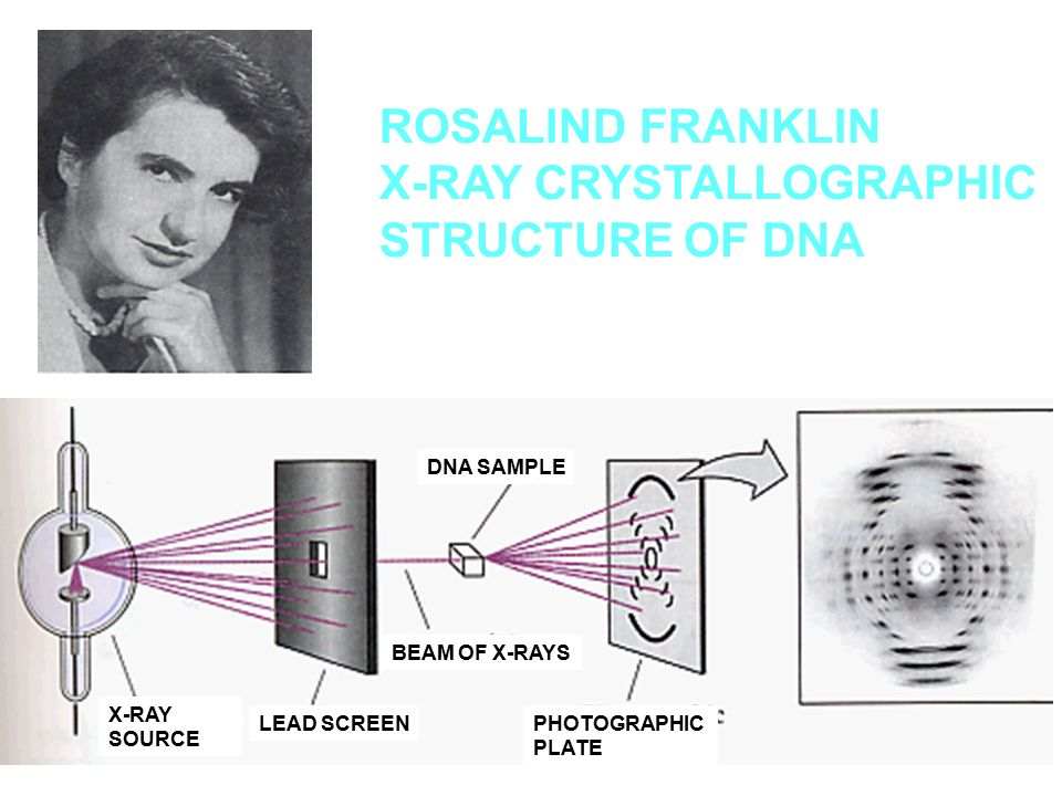 X-RAY CRYSTALLOGRAPHIC STRUCTURE OF DNA