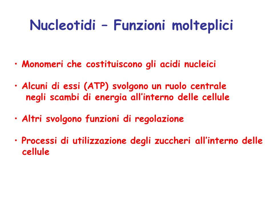 Nucleotidi – Funzioni molteplici