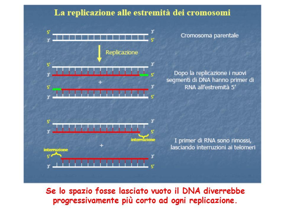 Se lo spazio fosse lasciato vuoto il DNA diverrebbe