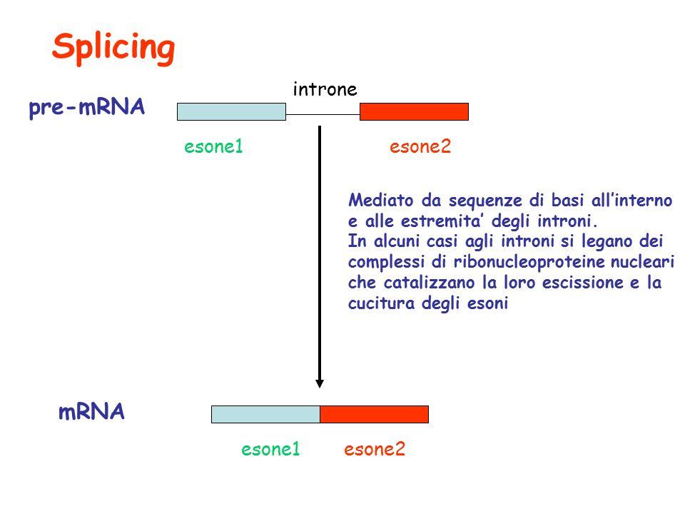 Splicing pre-mRNA mRNA introne esone1 esone2 esone1 esone2