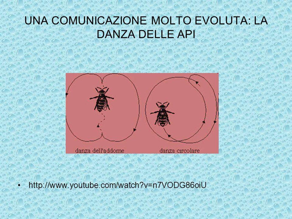 UNA COMUNICAZIONE MOLTO EVOLUTA: LA DANZA DELLE API