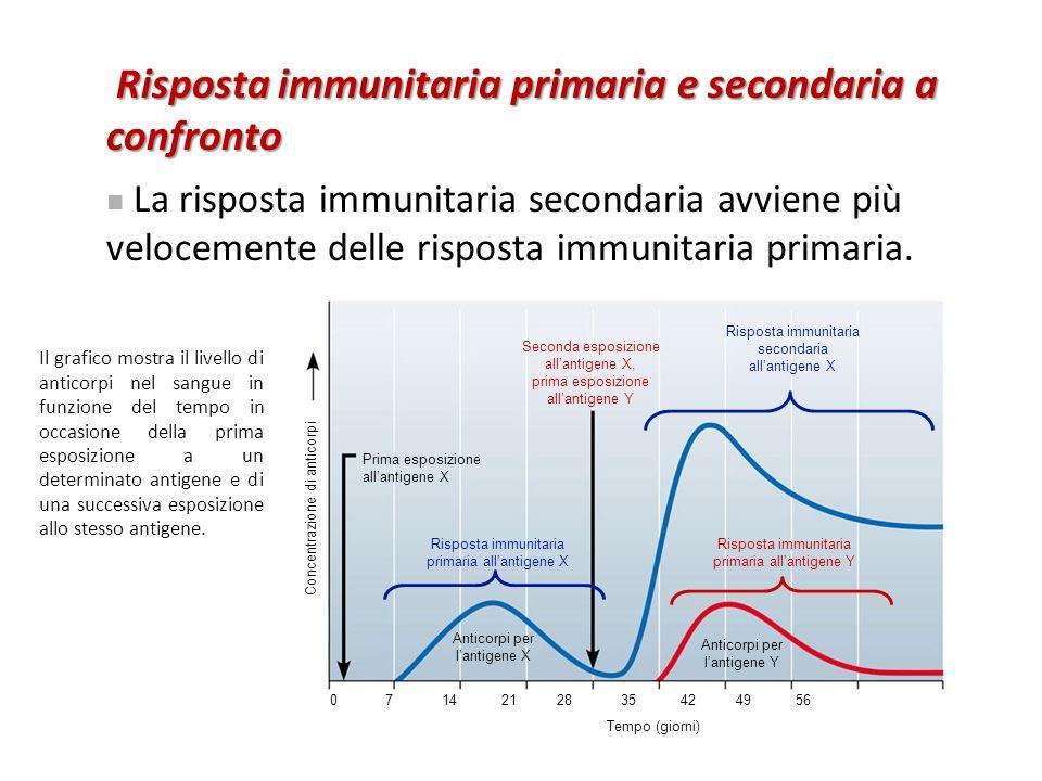 Risposta immunitaria primaria e secondaria a confronto