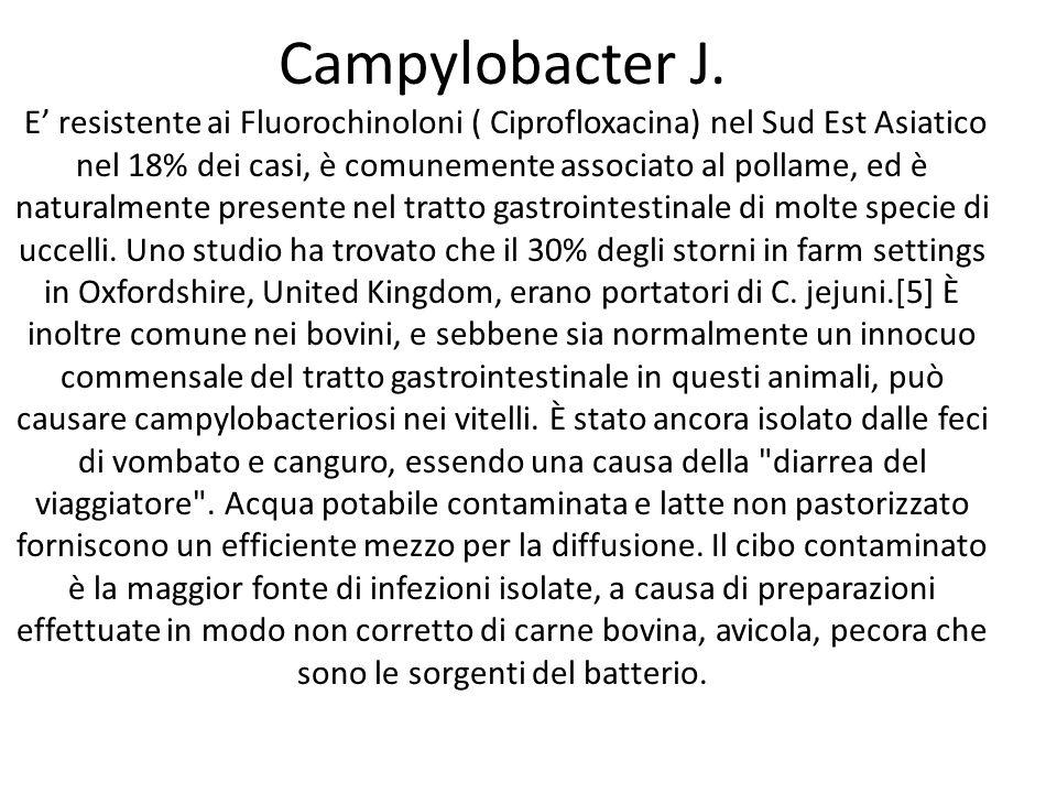 Campylobacter J.