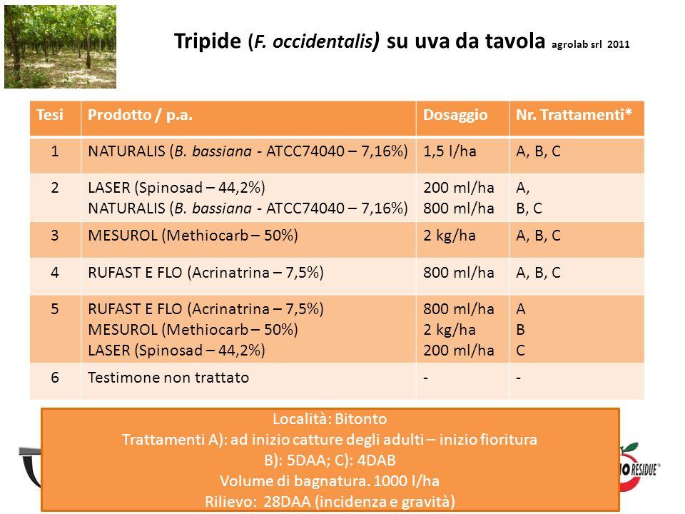 Tripide (F. occidentalis) su uva da tavola agrolab srl 2011