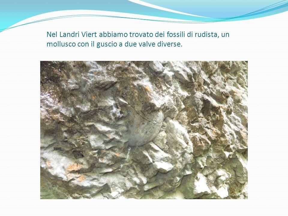 Nel Landri Viert abbiamo trovato dei fossili di rudista, un mollusco con il guscio a due valve diverse.