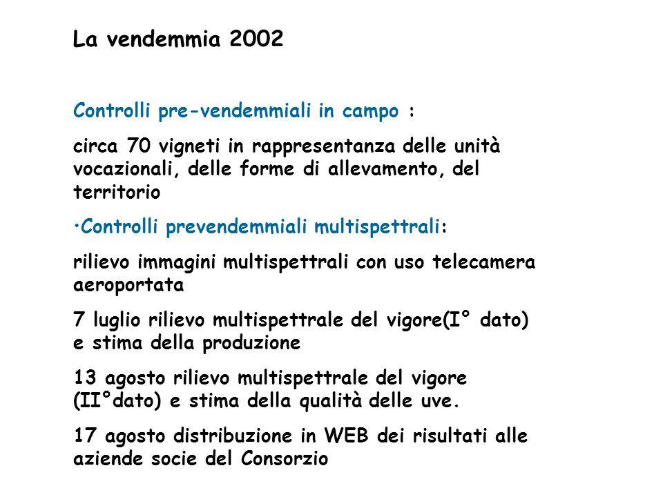 La vendemmia 2002 Controlli pre-vendemmiali in campo :