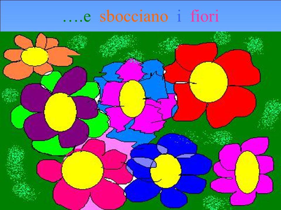 ….e sbocciano i fiori
