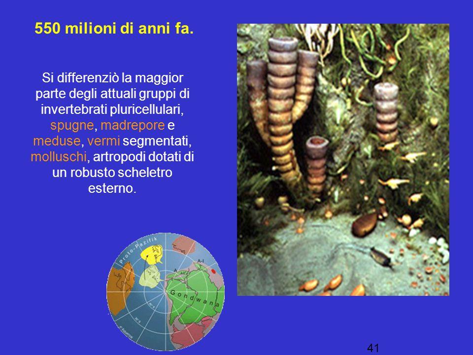 550 milioni di anni fa.